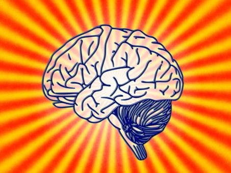 brain-78440__340